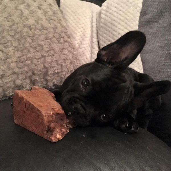 natural chew root good for french bull terriers