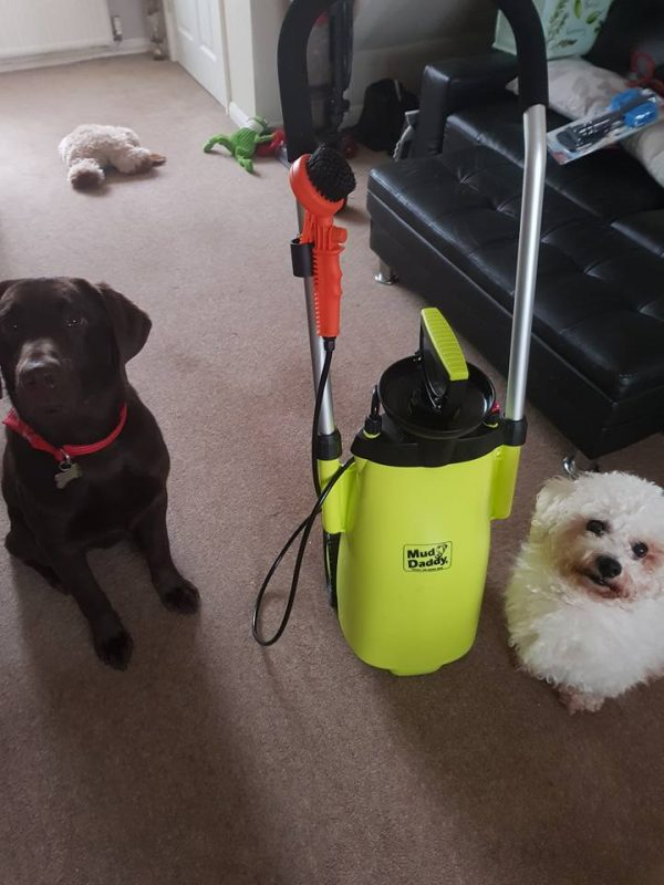 wash multiple dogs after a dog walk