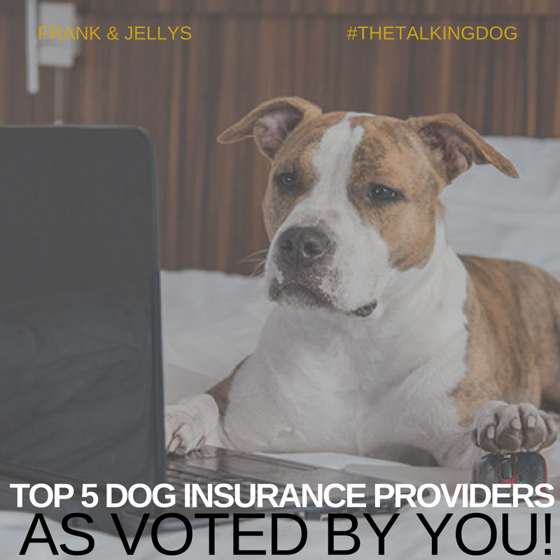 TOp 5 dog insurance providers as voted by you