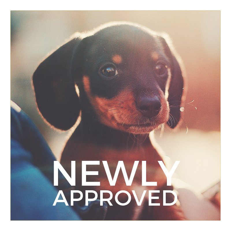 New Approved Dog Products