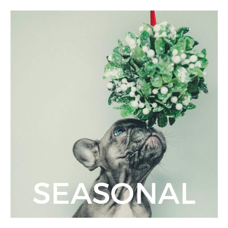 This Season Dog Products