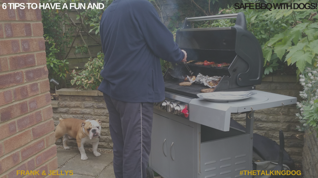 6 tips for a fun and safe BBQ with dogs