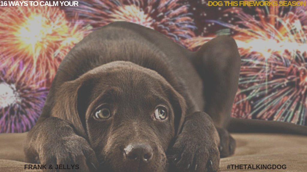 16 WAYS TO CALM YOUR DOG THIS FIREWORKS SEASON