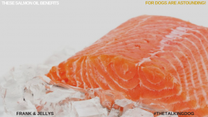 These salmon oil benefits for dogs are astounding!
