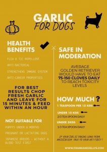 Can dogs eat garlic? Is it good or bad