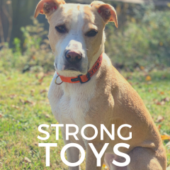 Strong Dog Toys