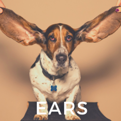Ear Cleaners