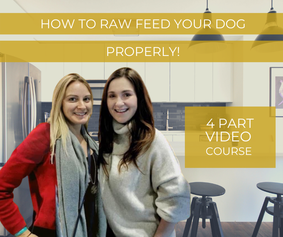 How to Raw Feed Your Dog Properly