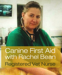Online Canine First Aid Course with registered vet nurse Rachel Bean