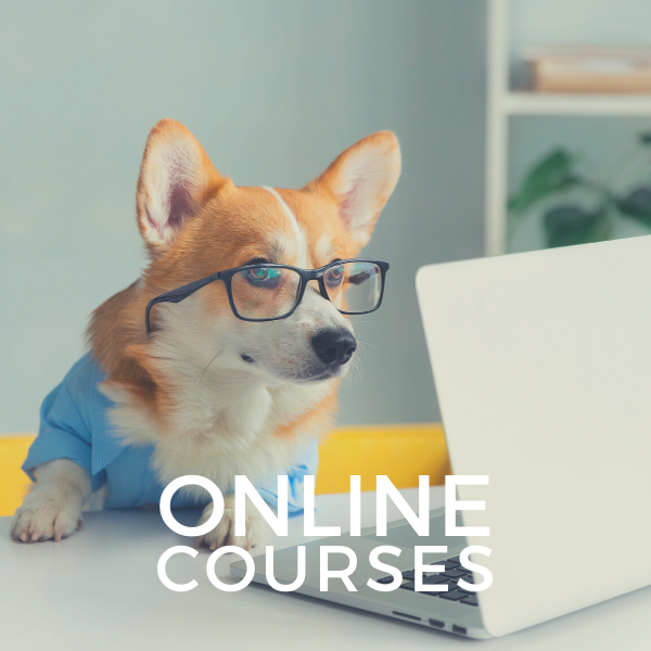 FRANK AND JELLYS ONLINE DOG COURSES